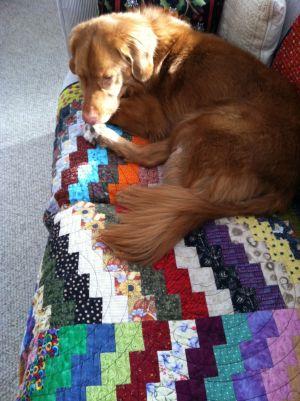 teddy on b hunter quilt